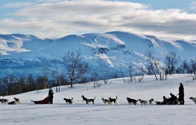 Trineo de perros en la Laponia de Noruega