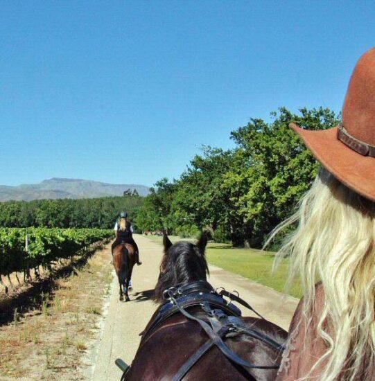 Paseo en carruaje por los viñedos de Boschendal en Sudáfrica