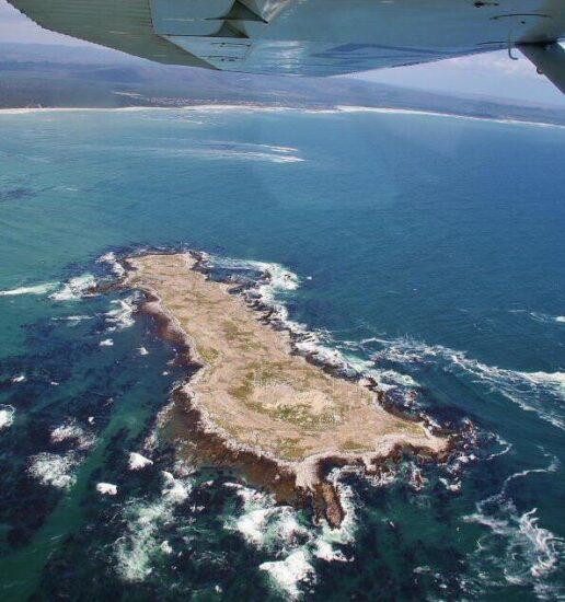 Sobrevolar en avioneta la reserva natural de Walker Bay en Sudáfrica