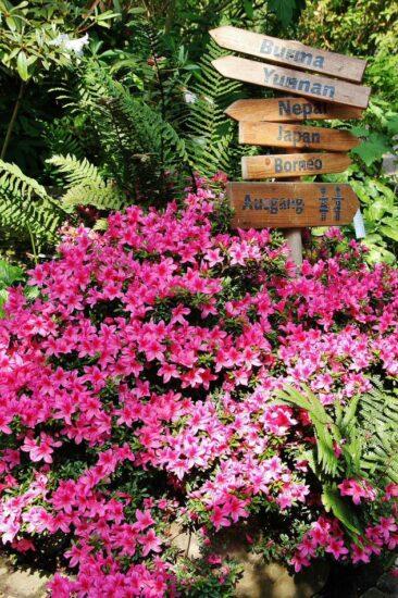 Botanika en el parque Rhodondendro de Bremen en Alemania