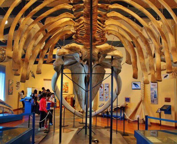 Museo de Historia Natural en Ferrol