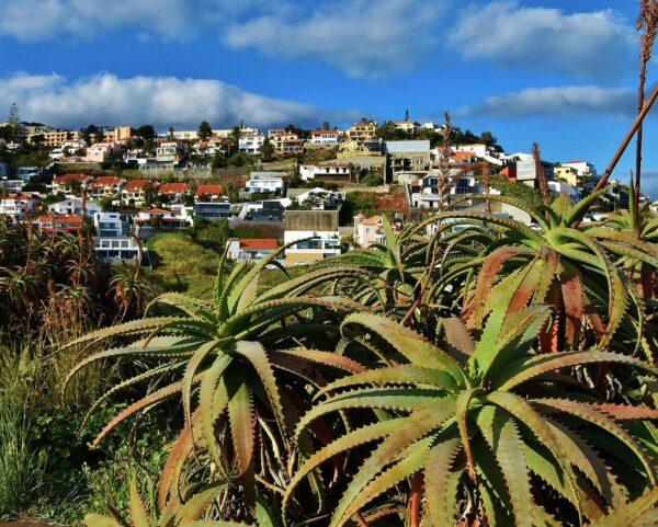Vegetación tropical en la isla de Madeira en Portugal