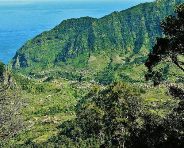 Bosques de laurisilva en la isla de Madeira en Portugal