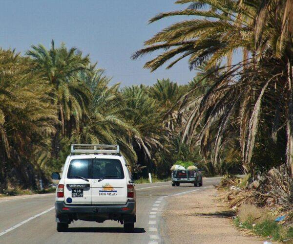 Oasis cerca de Douz en Túnez