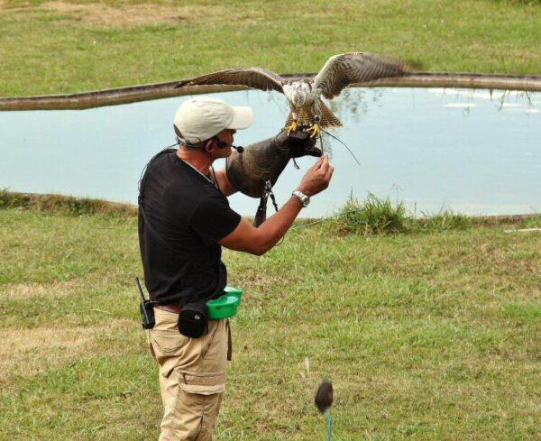 Espectáculo de aves rapaces en el parque de Cabárceno en Cantabria