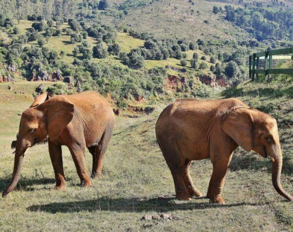 Elefantes en el parque de la naturaleza de Cabárceno en Cantabria