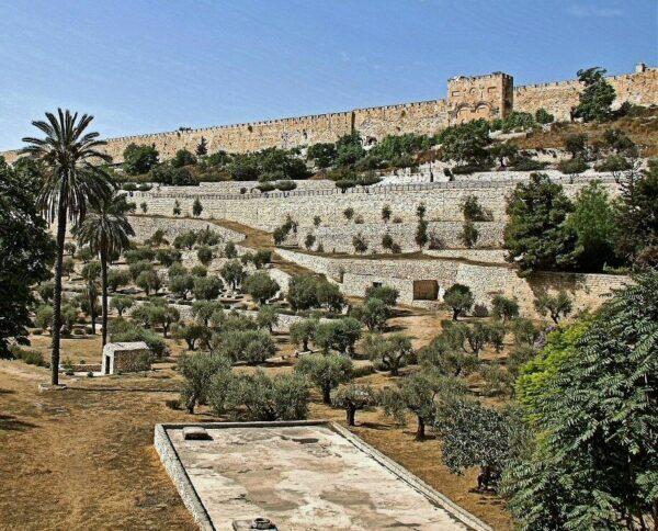 Huerto de Getsemaní frente a murallas de Jerusalén