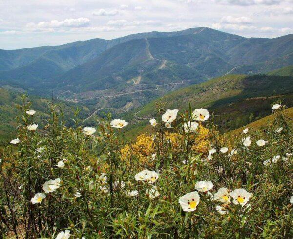 Paisaje de primavera en Las Hurdes en Cáceres