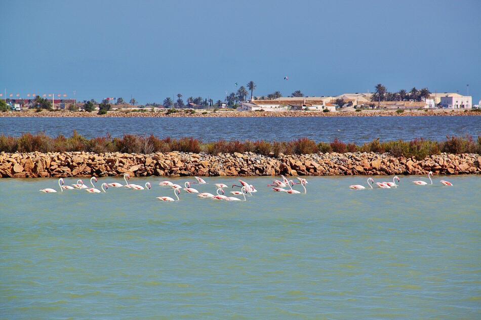 Salinas de San Pedro de Pinatar en el Mar Menor en Murcia