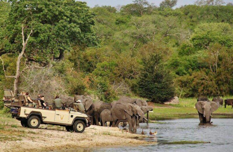 Elefantes en el safari en el parque Kruger en Sudáfrica