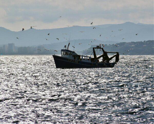 Barcos de Pesca en Palamós en Costa Brava