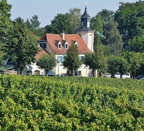 Bodega y viñedos en Radebeul cerca de Dresde