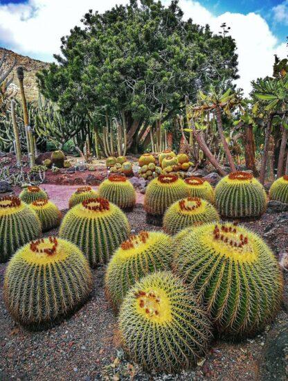 Jardín Canario en Las Palmas de Gran Canaria