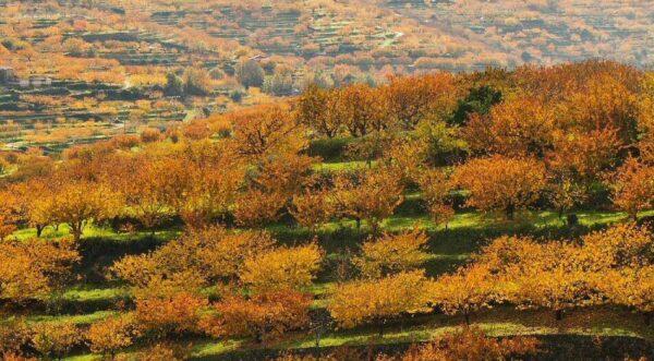 Paisajes de otoño en el Valle del Jerte @Foto: Angel Simón