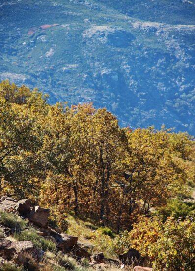 Paisajes de Otoño en el Valle del Jerte en Extremadura