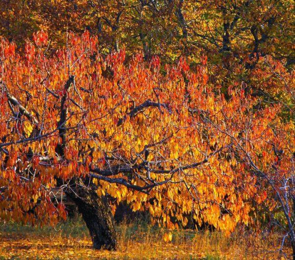 Paisajes del Valle del Jerte en Cáceres en otoño