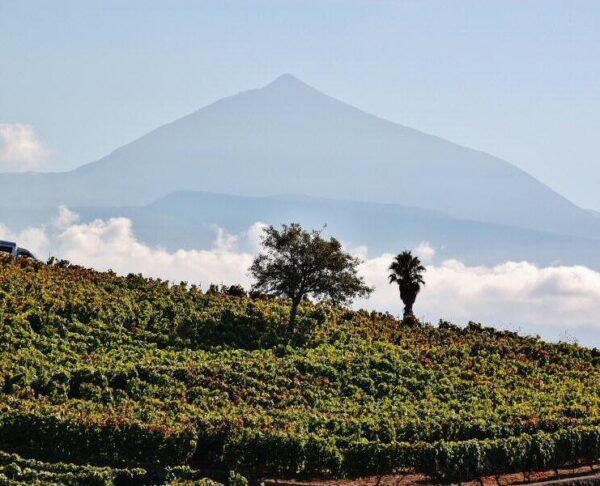 Valle de la Orotava en Tenerife