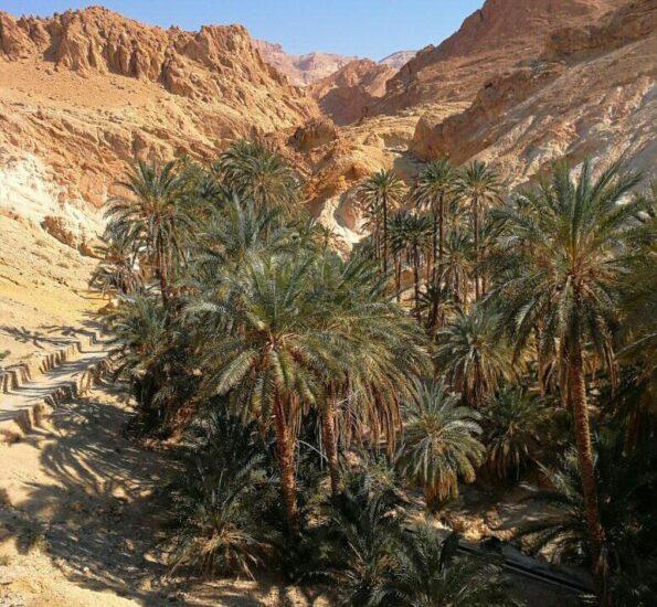 Oasis de Chebika cerca de Tozeur en Túnez