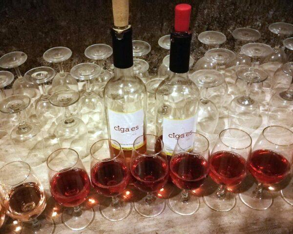 Vino rosado de Cigales en Valladolid