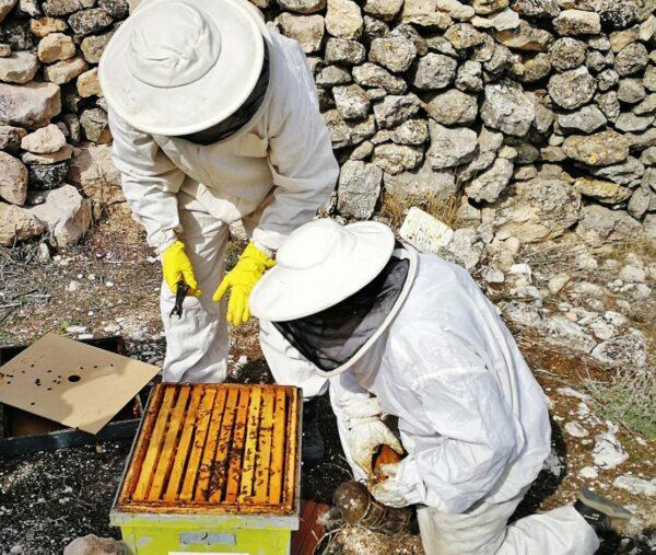 Apicultura en Valoria la Buena en la Ruta del Vino de Cigales