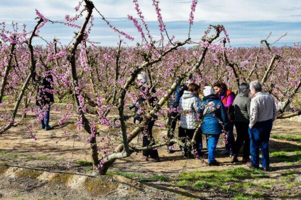 Visita guiada por frutales en flor en Aitona en Lleida