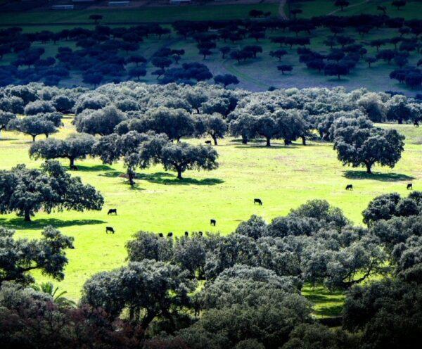 Paisaje de dehesa de Extremadura cerca del Lago de Alqueva