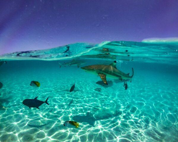 Barrera de coral en Moorea