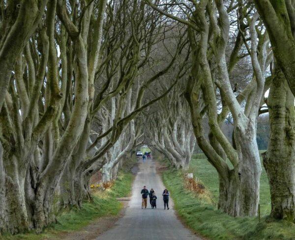 Dark Hedges, escenario de Juego de Tronos en Irlanda del Norte