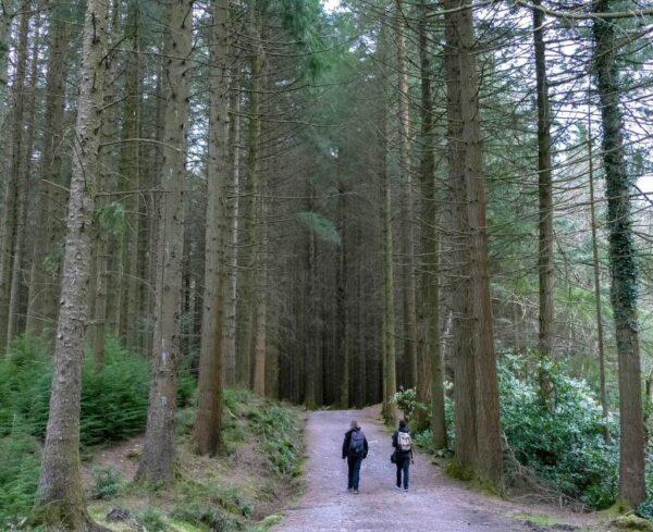 Parque Forestal de Tollymore en Irlanda del Norte