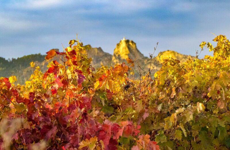 Viñedos en otoño cerca de Haro en La Rioja
