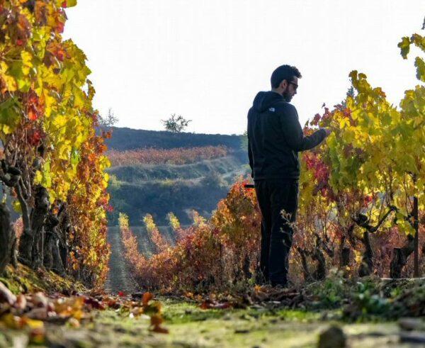 Viñedos en Rioja