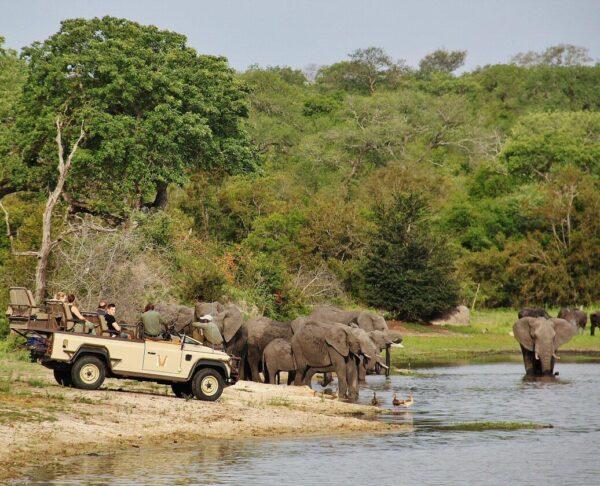 Safari fotográfico en el parque Kruger en Sudáfrica