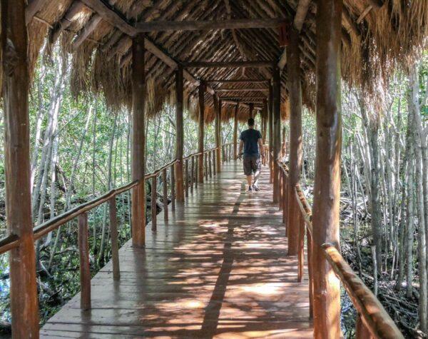Zona de manglares del TRS Yucatan Hotel en Riviera Maya