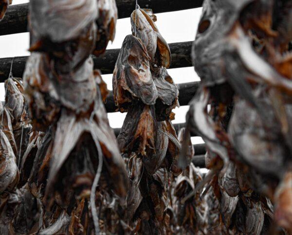 Secadero de pescado en Islandia