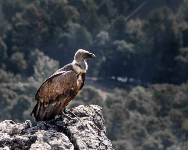 Fauna en la Sierra de Cazorla en Jaén