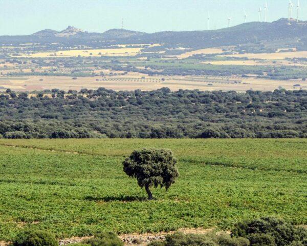Paisajes en Finca Antigua en Los Hinojosos
