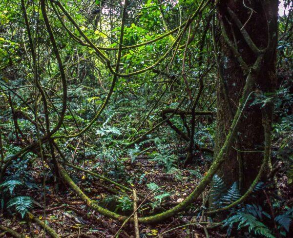 Bosque junto a las cataratas de Iguazú en Argentina
