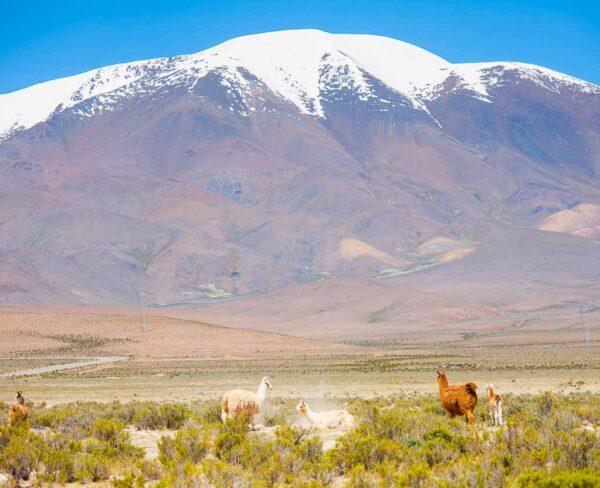 Paisajes de la puna atacameña al noroeste de Argentina